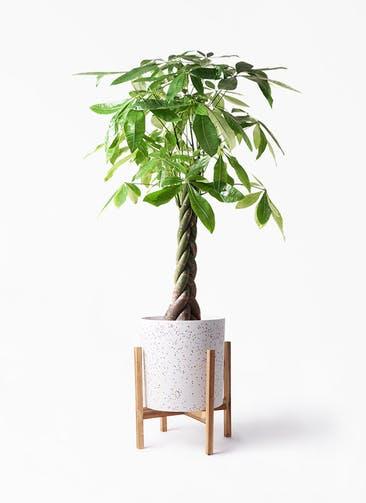 観葉植物 パキラ 8号 ねじり ホルスト シリンダー スパークルホワイト ウッドポットスタンド 付き