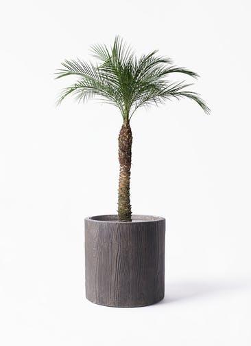 観葉植物 フェニックスロベレニー 8号 アルファ シリンダープランター ウッド 付き