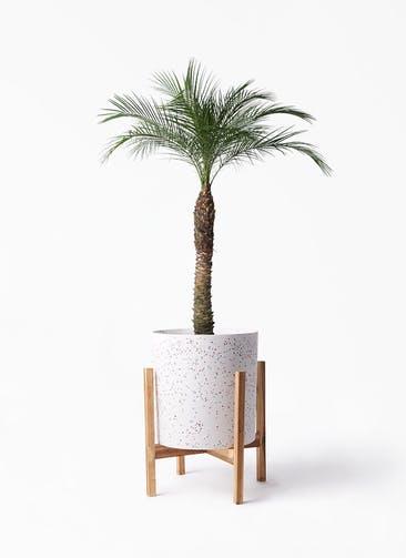 観葉植物 フェニックスロベレニー 8号 ホルスト シリンダー スパークルホワイト ウッドポットスタンド 付き