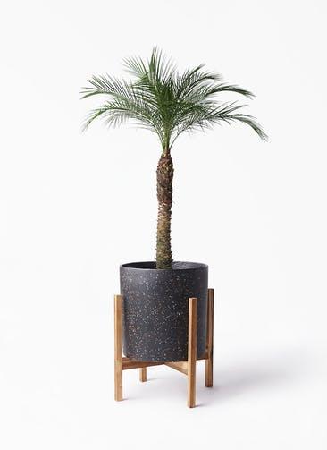 観葉植物 フェニックスロベレニー 8号 ホルスト シリンダー スパークルブラック ウッドポットスタンド 付き