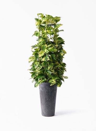 観葉植物 ポトス 8号 アートストーン トールラウンド ブラック 付き