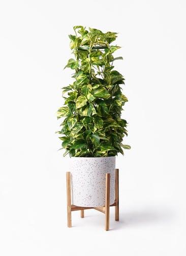 観葉植物 ポトス 8号 ホルスト シリンダー スパークルホワイト ウッドポットスタンド 付き