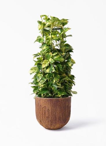 観葉植物 ポトス 8号 バル ユーポット ラスティ  付き