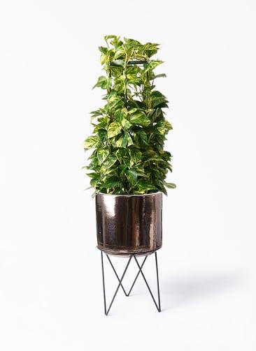 観葉植物 ポトス 8号 ビトロ エンデカ ゴールド アイアンポットスタンド ブラック  付き