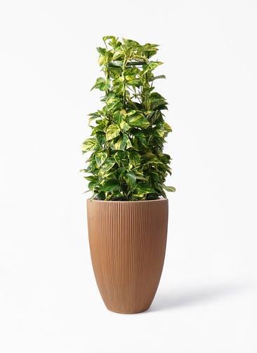 観葉植物 ポトス 8号 リブラ モノ ラスティ 付き