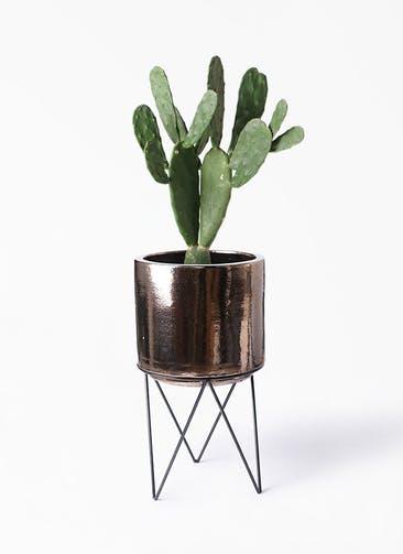 観葉植物 ウチワサボテン 8号 ビトロ エンデカ ゴールド アイアンポットスタンド ブラック  付き