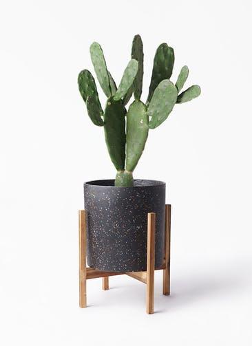 観葉植物 ウチワサボテン 8号 ホルスト シリンダー スパークルブラック ウッドポットスタンド 付き