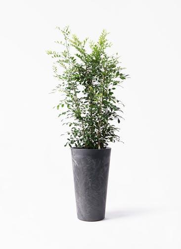 観葉植物 シルクジャスミン(げっきつ) 8号 アートストーン トールラウンド ブラック 付き