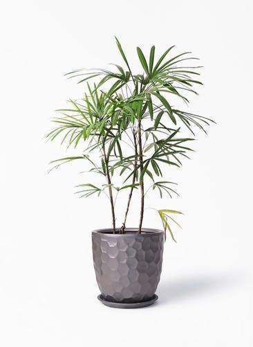 観葉植物 シュロチク(棕櫚竹) 8号 サンタクルストール ブロンズ 付き