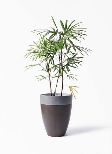 観葉植物 シュロチク(棕櫚竹) 8号 ファイバーストーン カプリ マッドブラウン 付き