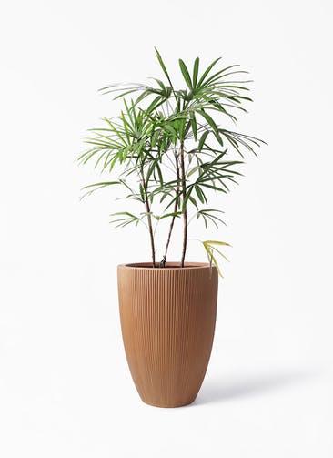 観葉植物 シュロチク(棕櫚竹) 8号 リブラ モノ ラスティ 付き