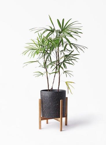 観葉植物 シュロチク(棕櫚竹) 8号 ホルスト シリンダー スパークルブラック ウッドポットスタンド 付き