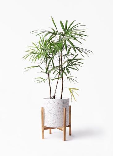 観葉植物 シュロチク(棕櫚竹) 8号 ホルスト シリンダー スパークルホワイト ウッドポットスタンド 付き