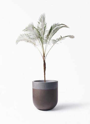 観葉植物 ヒメココス 10号 バルゴ ツートーン マットブラウン 付き