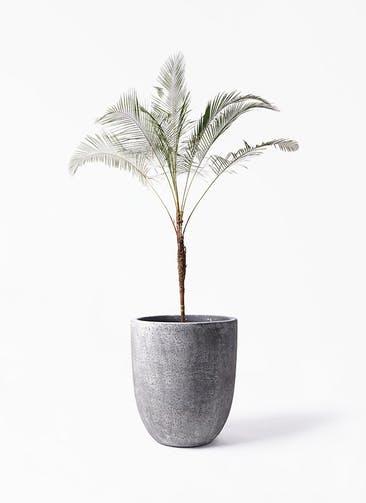 観葉植物 ヒメココス 10号 フォリオアルトエッグ ブラックウォッシュ 付き