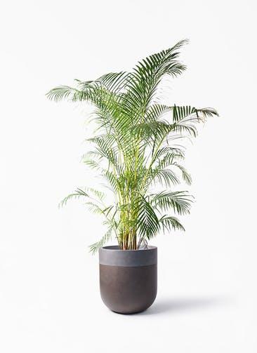 観葉植物 アレカヤシ 10号 バルゴ ツートーン マットブラウン 付き
