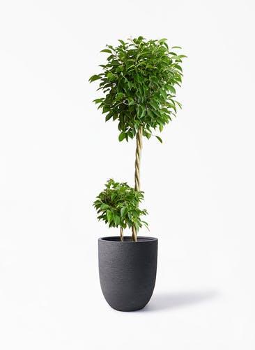 観葉植物 フィカス ベンジャミン 10号 玉造り ビアスアルトエッグ ブラック 付き