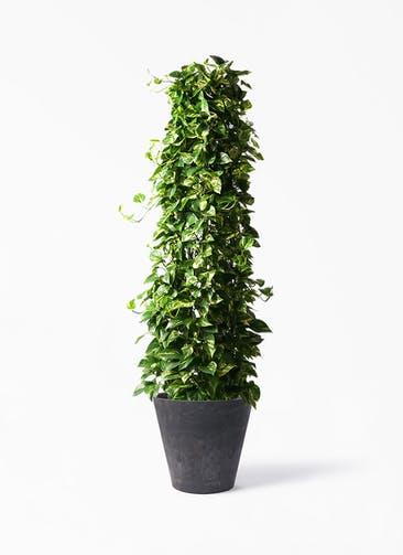 観葉植物 ポトス 10号 アートストーン ラウンド ブラック 付き