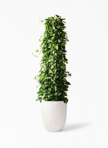 観葉植物 ポトス 10号 フォリオアルトエッグ クリーム 付き