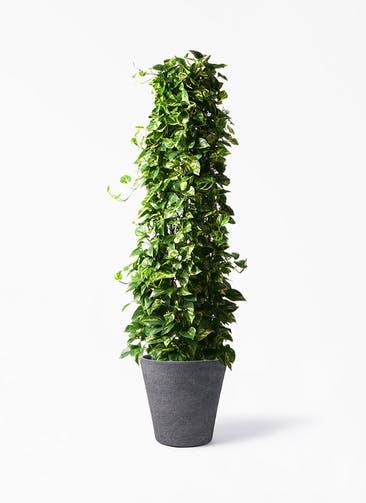 観葉植物 ポトス 10号 ビアスソリッド ブラック 付き
