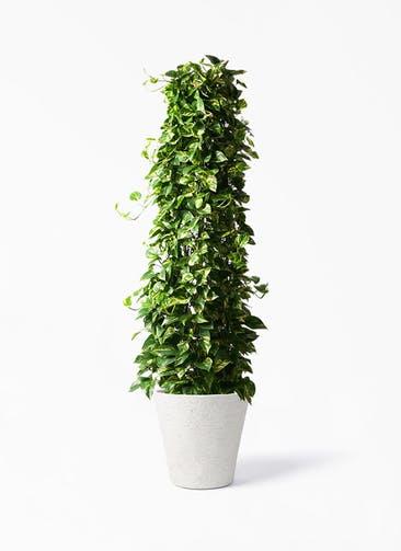 観葉植物 ポトス 10号 ビアスソリッド アイボリー 付き