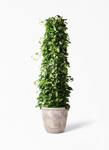 観葉植物 ポトス 10号 テラアストラ シリウス 付き