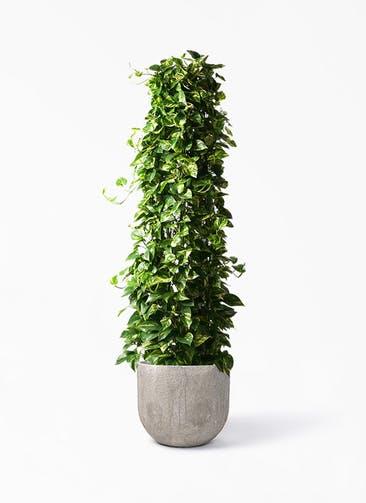 観葉植物 ポトス 10号 バル ユーポット アンティークセメント 付き