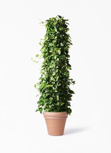 観葉植物 ポトス 10号 トスカーナ リムポット 付き