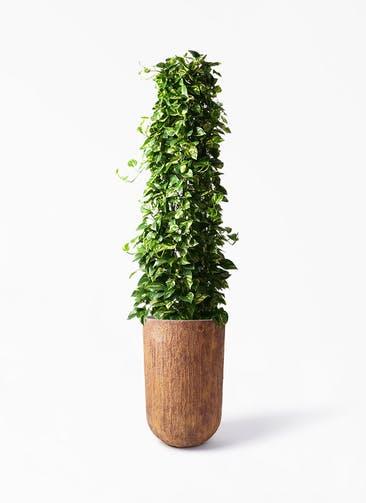 観葉植物 ポトス 10号 バル トール ラスティ 付き