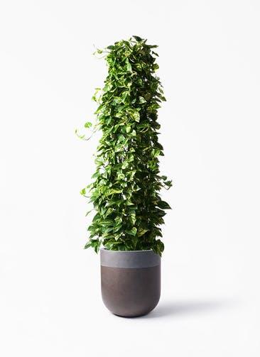 観葉植物 ポトス 10号 バルゴ ツートーン マットブラウン 付き