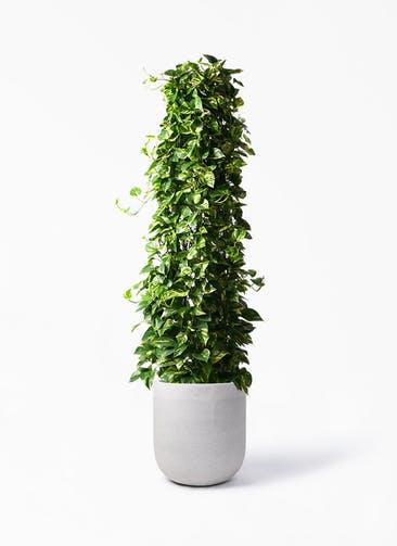 観葉植物 ポトス 10号 バルゴ モノ ライトグレー 付き