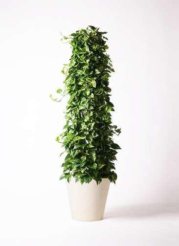 観葉植物 ポトス 10号 フォリオソリッド クリーム 付き