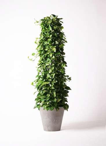 観葉植物 ポトス 10号 アートストーン ラウンド グレー 付き