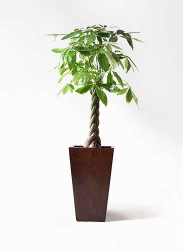 観葉植物 パキラ 8号 ねじり MOKU スクエア 付き