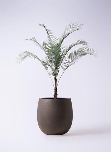 観葉植物 ヒメココス 8号 テラニアス バルーン アンティークブラウン 付き