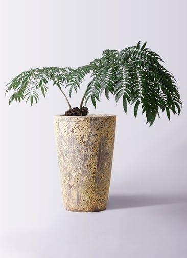 観葉植物 リュウビンタイ 8号 アトランティス クルーシブル 付き