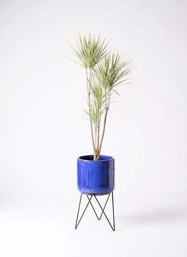 観葉植物 コンシンネ ホワイポリー 8号 ストレート ビトロ エンデカ ブルー アイアンポットスタンド ブラック 付き