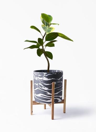 観葉植物 フィカス アルテシーマ 7号 曲り ホルスト シリンダー マーブル ウッドポットスタンド 付き