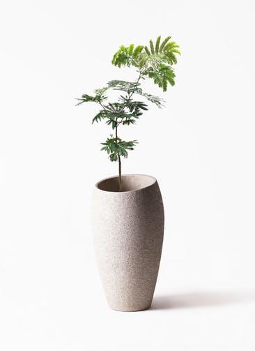 観葉植物 エバーフレッシュ 7号 ボサ造り  Eco Stone(エコストーン) トールタイプ Light Gray 付き