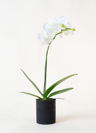 ミニ胡蝶蘭 白 1本立ち ウッド(黒)鉢付き