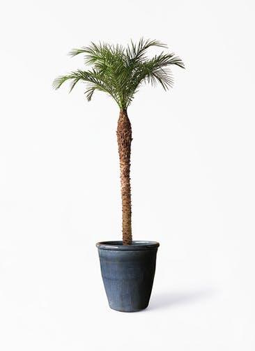 観葉植物 フェニックスロベレニー 10号 Antique Terra Cotta (アンティークテラコッタ)  Black 付き
