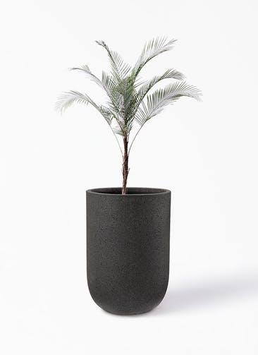観葉植物 ヒメココス 8号 コーディル ミドル  ブラック 付き
