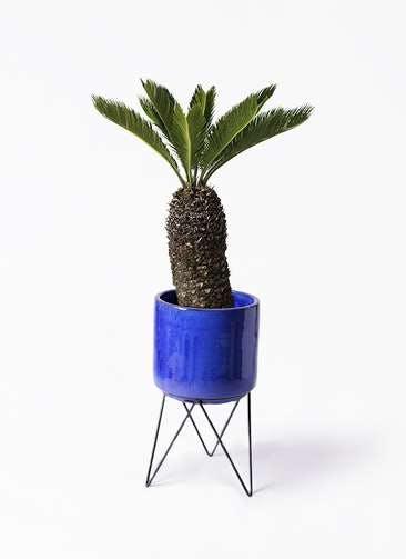 観葉植物 ソテツ 8号 ビトロ エンデカ ブルー アイアンポットスタンド ブラック 付き
