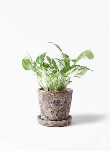 観葉植物 ポトス 3号 ハレー カーキー 付き