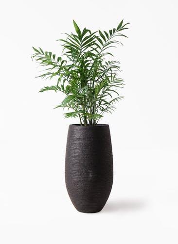 観葉植物 テーブルヤシ 7号 フォンティーヌトール 黒 付き