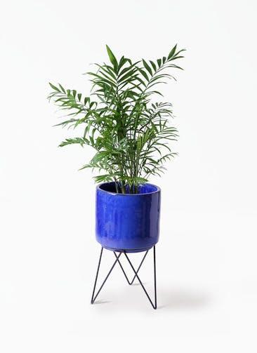 観葉植物 テーブルヤシ 7号 ビトロ エンデカ ブルー アイアンポットスタンド ブラック 付き