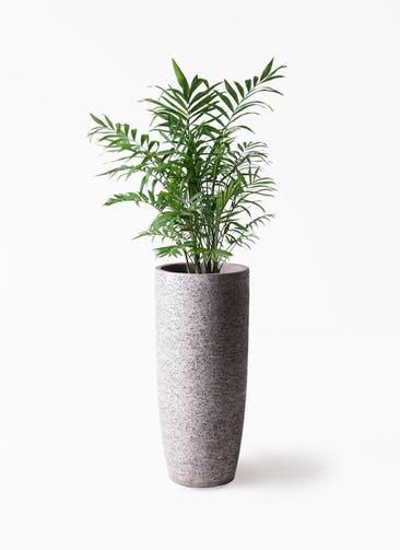 観葉植物 テーブルヤシ 7号 エコストーントールタイプ Gray 付き