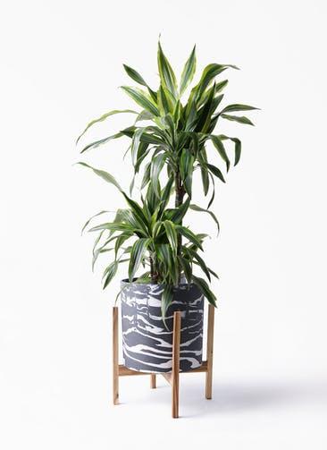 観葉植物 ドラセナ ワーネッキー レモンライム 8号 ホルスト シリンダー マーブル ウッドポットスタンド付き