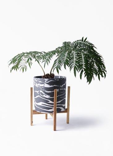 観葉植物 リュウビンタイ 8号 ホルスト シリンダー マーブル ウッドポットスタンド付き