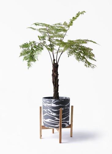 観葉植物 ヘゴ 8号 ホルスト シリンダー マーブル ウッドポットスタンド付き